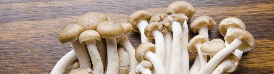 header_mushrooms.jpg