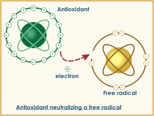How an antioxidant neutralizes a free radical
