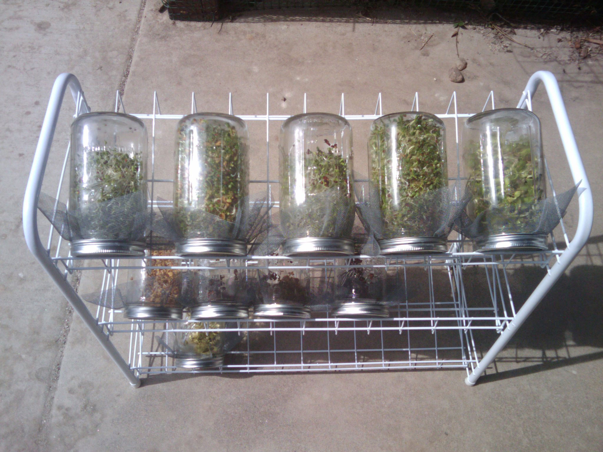 Shoe rack to hold the sprouting jars
